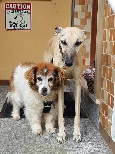Hunde (2)