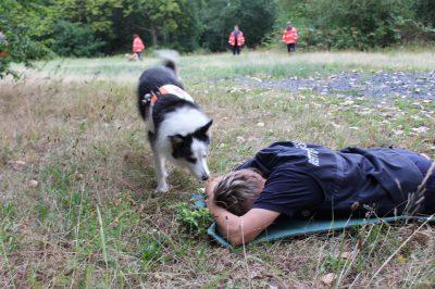 Die Hunde werden darauf trainiert, Menschen aufzufinden.